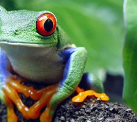 Save the Amazon Rainforest Organisation