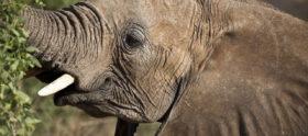 Sauvez la population d'éléphants avec des moyen concrets