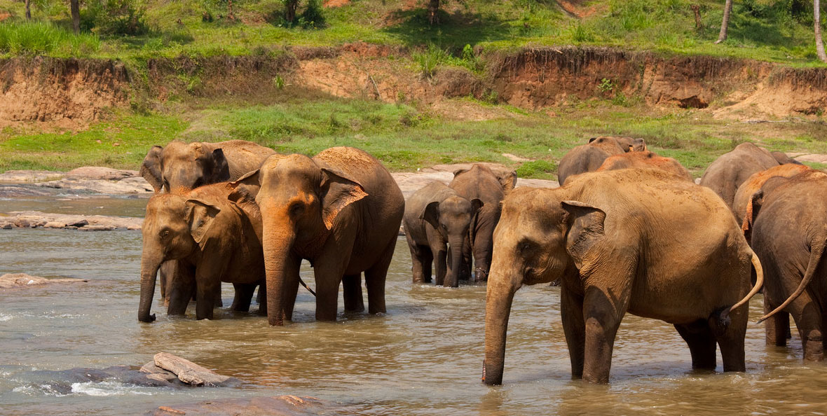 Save the Elephants works to sustain elephant populations